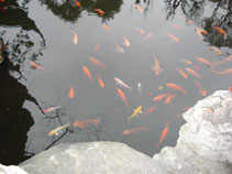 Goldfish pond - feng shui for business with Vicky Sweetlove